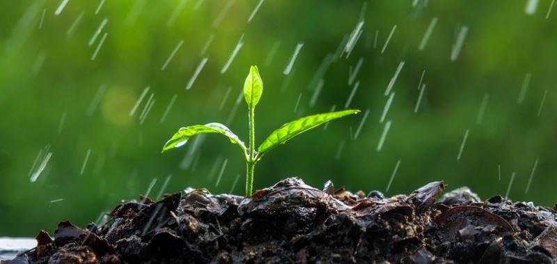 yagmur-sonrasi-ortaya-cikan-toprak-kokusunun-kaynagi-aciklandi