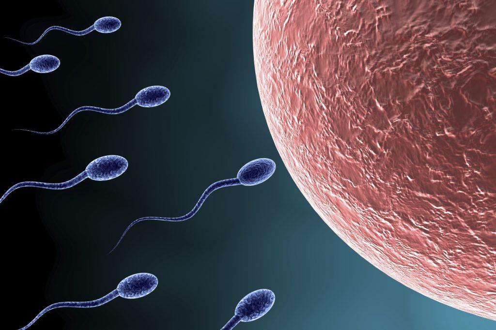 yumurtalar-spermler-konusunda-oldukca-secici-davraniyor